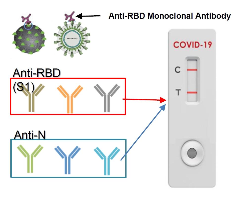 przeciwciała monoklonalne Anti-RBD test na koronawirusa